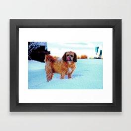 puppy pow face Framed Art Print