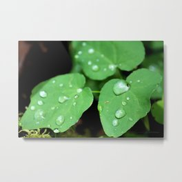 Just After the Rain Metal Print