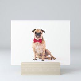 Pug relax Mini Art Print