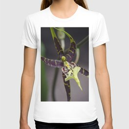 quietly gorgeous T-shirt