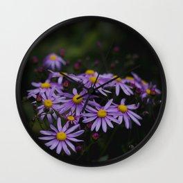 purple daisies in evening light Wall Clock