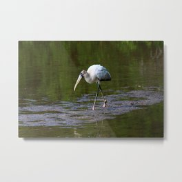 Striding Wood Stork Metal Print