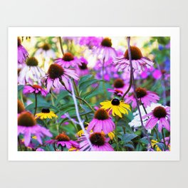 Yellow Flowers in the Purple Coneflower Garden Art Print