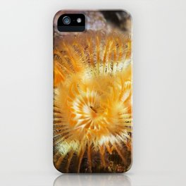 Orange Serpulid Worm iPhone Case