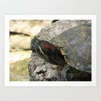 tortoise Art Prints featuring Tortoise by Liya Perfidious