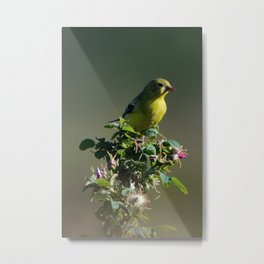 Goldfinch Flower Metal Print