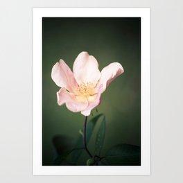 October flower Art Print