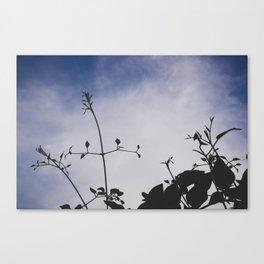 backlit twining Canvas Print