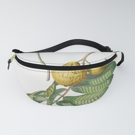 Plantae Selectae No 42-guaiaba or Guava by Georg Dionysius Ehret Fanny Pack