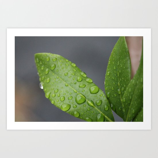 Green Leaves after the rain Art Print