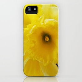 Yellow Daffodil iPhone Case