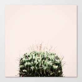 Cactus on pink Canvas Print