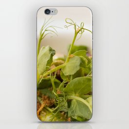 The Art of Food Curly Greens iPhone Skin