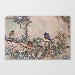 Three Little Birds in a Blizzard Canvas Print