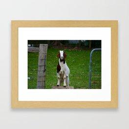 Young Thurman @ Happy Hooves Farm Sanctuary Australia Framed Art Print