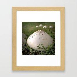 Yard of Conical Mushrooms Framed Art Print