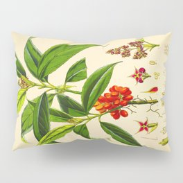 Vintage Scientific Botanical Illustration Species Drawing Himalayan Plants Green Leaves Red Berries Pillow Sham