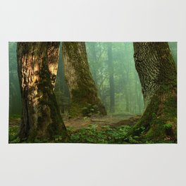 Forest landscape. Old mossy trees Rug
