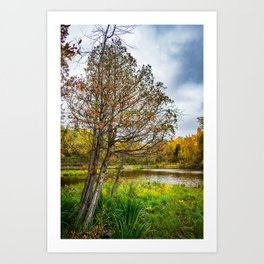 Lonely Tree in Billings Park Art Print