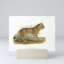 India Mainless Lion Mini Art Print