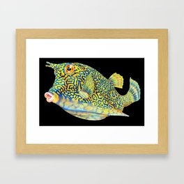 Cowfish Framed Art Print