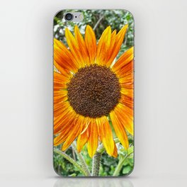 Orange Sunflower NYC iPhone Skin