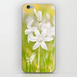 White Ornithogalum nutans pretty bloom iPhone Skin