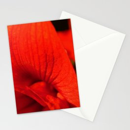 Amaryllis Bloom Stationery Cards