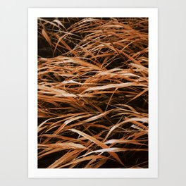 The Cold Winds Art Print