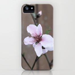 Peach Blossoms iPhone Case