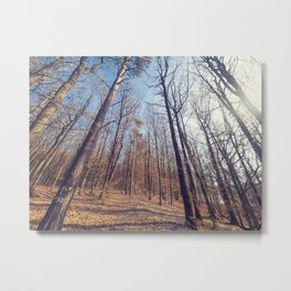 Steigerwald Impressions II - Straight and tall Metal Print