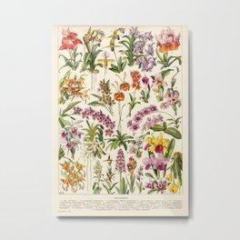 Adolphe Millot - Orchids - French vintage botanical illustration Metal Print