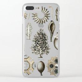 Ernst Haeckel - Scientific Illustration - Calcispongiae Clear iPhone Case