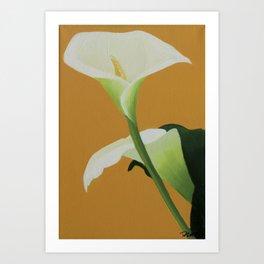 Calla Lilly No.3 Art Print