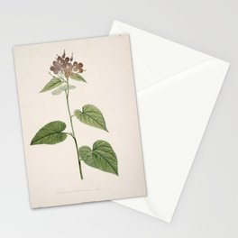 lunaria rediviva Redoute Roses 3 Stationery Cards