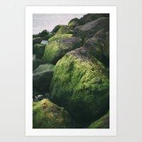 Algae Art Print