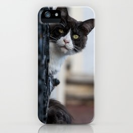 Curious Black and White Cat iPhone Case