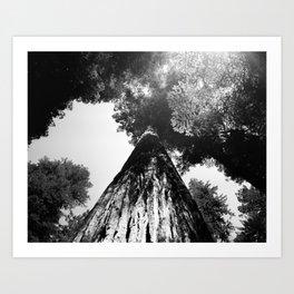 """REDWOOD - Fuji Acros 100 - 4x5"""" film Art Print"""
