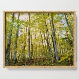 Birches in Autumn Light Serving Tray