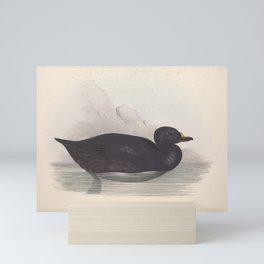BLACK SCOTER (2) Mini Art Print