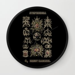 """""""Stephoidea"""" from """"Art Forms of Nature"""" by Ernst Haeckel Wall Clock"""