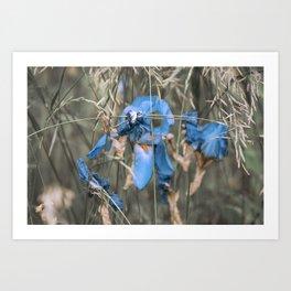 Blue iris on a pale green background. Art Print