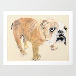 Bulldog Portrait Art Print
