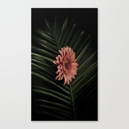 Tropical gerbera Canvas Print
