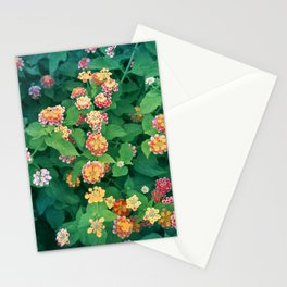 Mediterranean Flowers and Foliage Stationery Cards