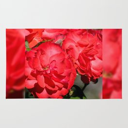 Flowerheads of red roses Rug