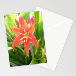 Orange Amaryllis Flower Blooms in Springtime  Stationery Cards