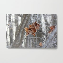frost in the fall Metal Print