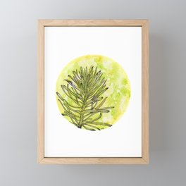 Euphorbia on green and yellow Framed Mini Art Print