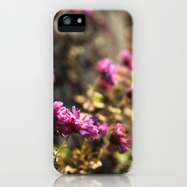 November Daisies iPhone Case